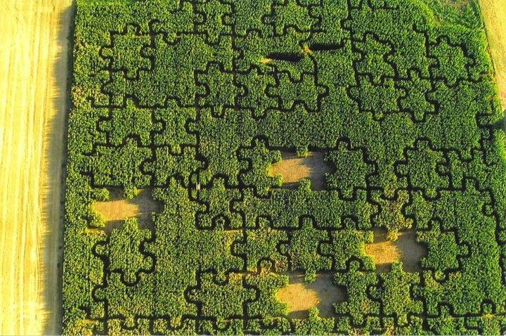 walla walla corn maze washington state haunt